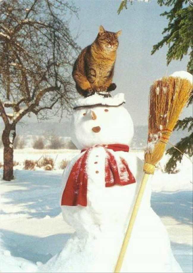 funny christmas photos 9