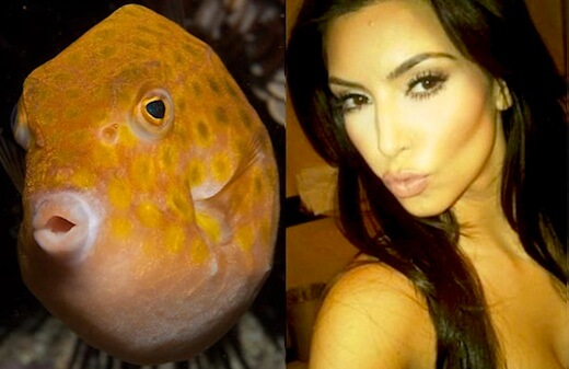 animals that look like celebrites 2