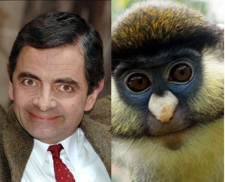 animals that look like celebrites 6