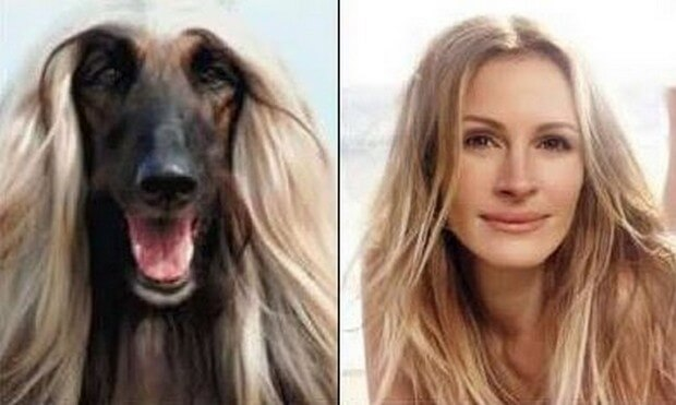 animals that look like celebrites 7