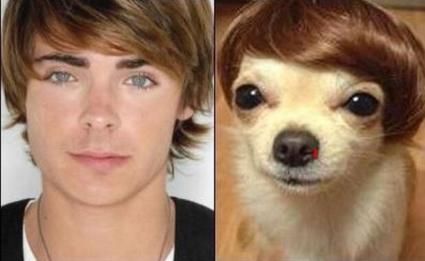 animals that look like celebrites 9