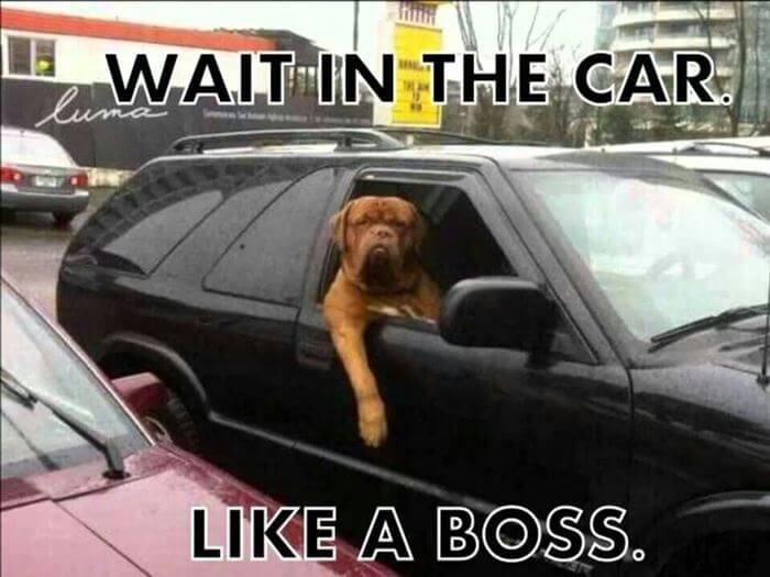 like a boss 8