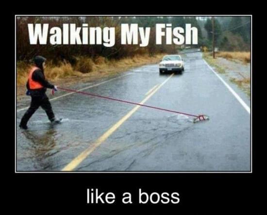 like a boss 9