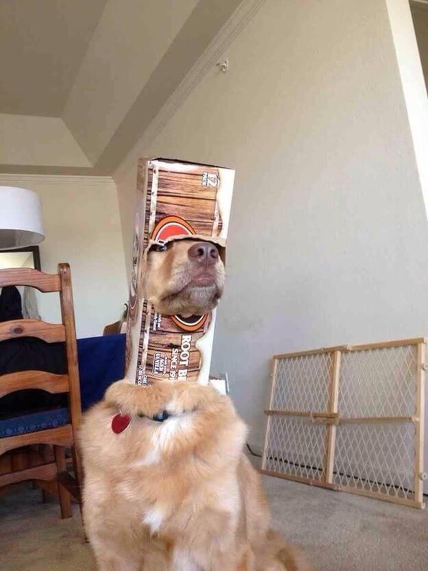 awkward dogs 21