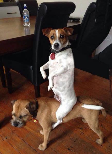 awkward dogs 22