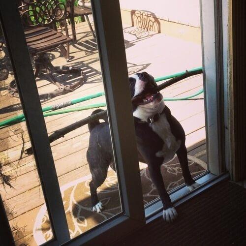 awkward dogs 26