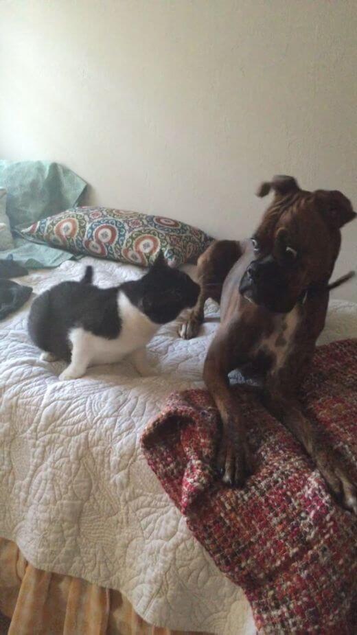 awkward dogs 5