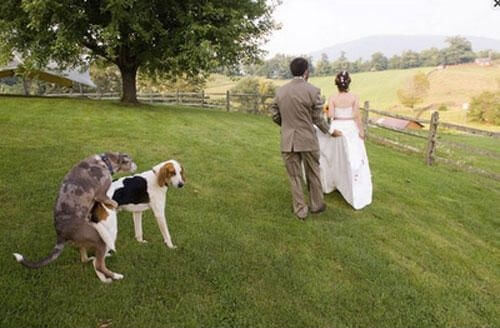 wtf wedding photos 22
