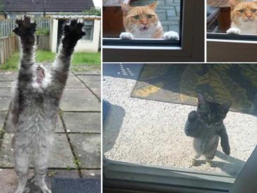 17 Cats that don't like to stay Outside