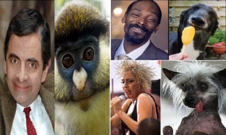 8 Animals That Look Like Celebrites