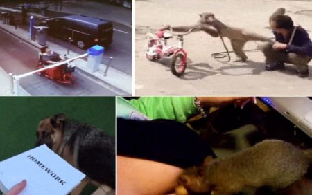 Best Gifs Of The Week
