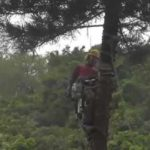tree-cutter-fail