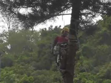 tree-cutter-fail