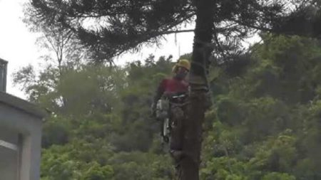 Tree Cutter Fail