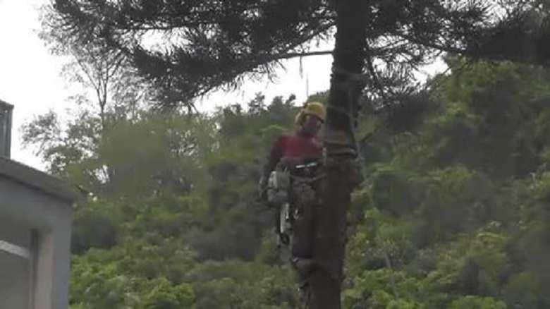 Tree Cutter Fail